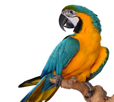 Bate-papo sobre aves