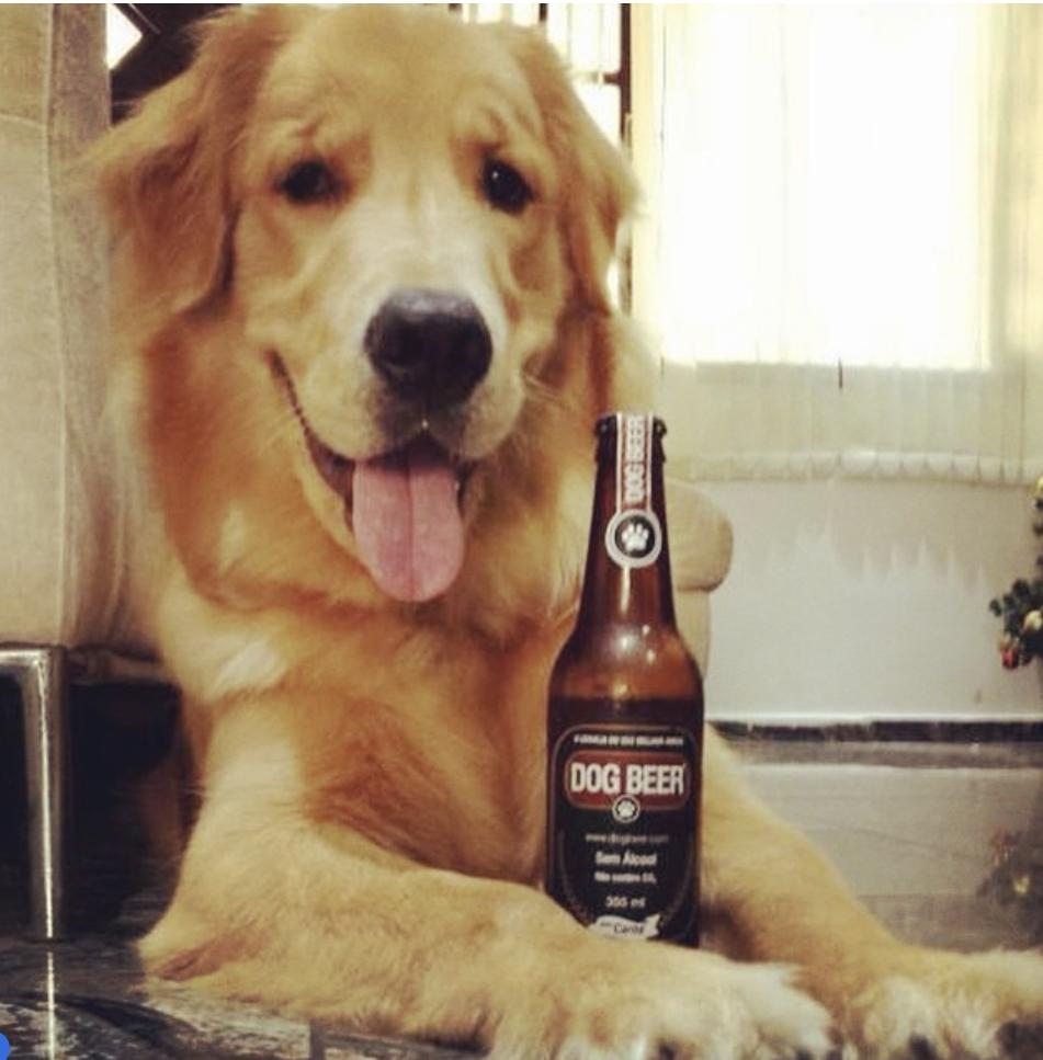 Dog Beer